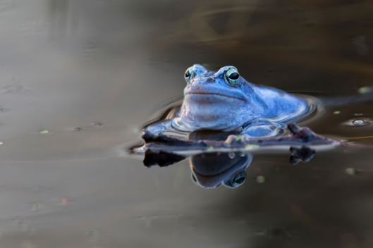 files/images/15-ask-polly-frog.w529.h352.jpg
