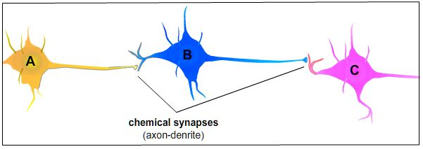 files/images/3neurons.jpg, size: 16665 bytes, type:  image/jpeg