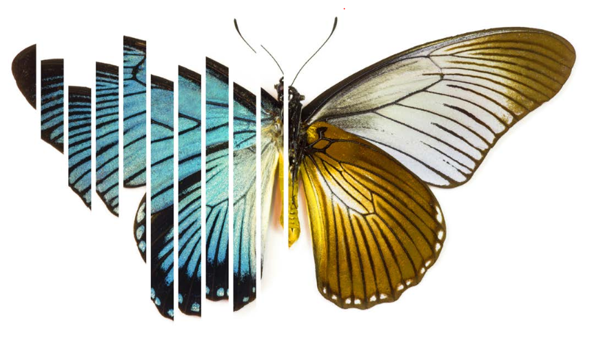 files/images/Deloitte_Butterfly.PNG