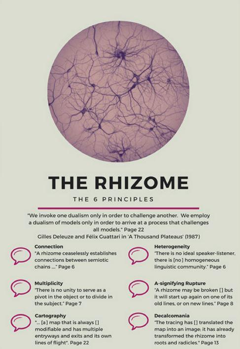 files/images/Rhizome.JPG