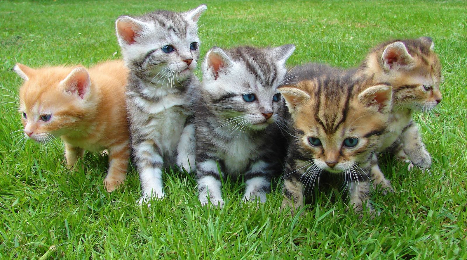 files/images/animals-cats-cute-45170-2.jpg