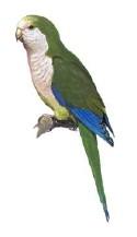 files/images/bird.jpg, size: 5213 bytes, type:  image/jpeg