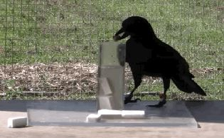 files/images/crow.JPG