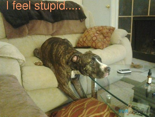 files/images/funny-animals-i-feel-stupid.jpg