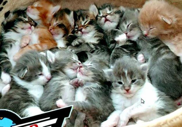 files/images/kittens.JPG