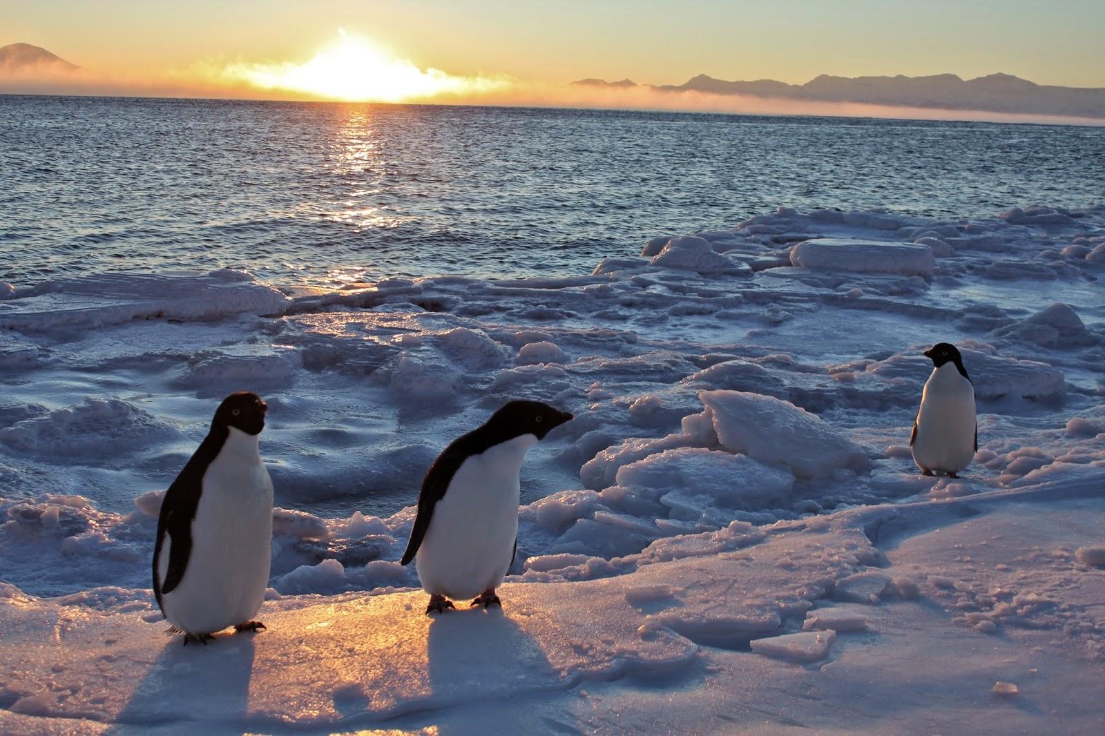 files/images/penguins.jpg