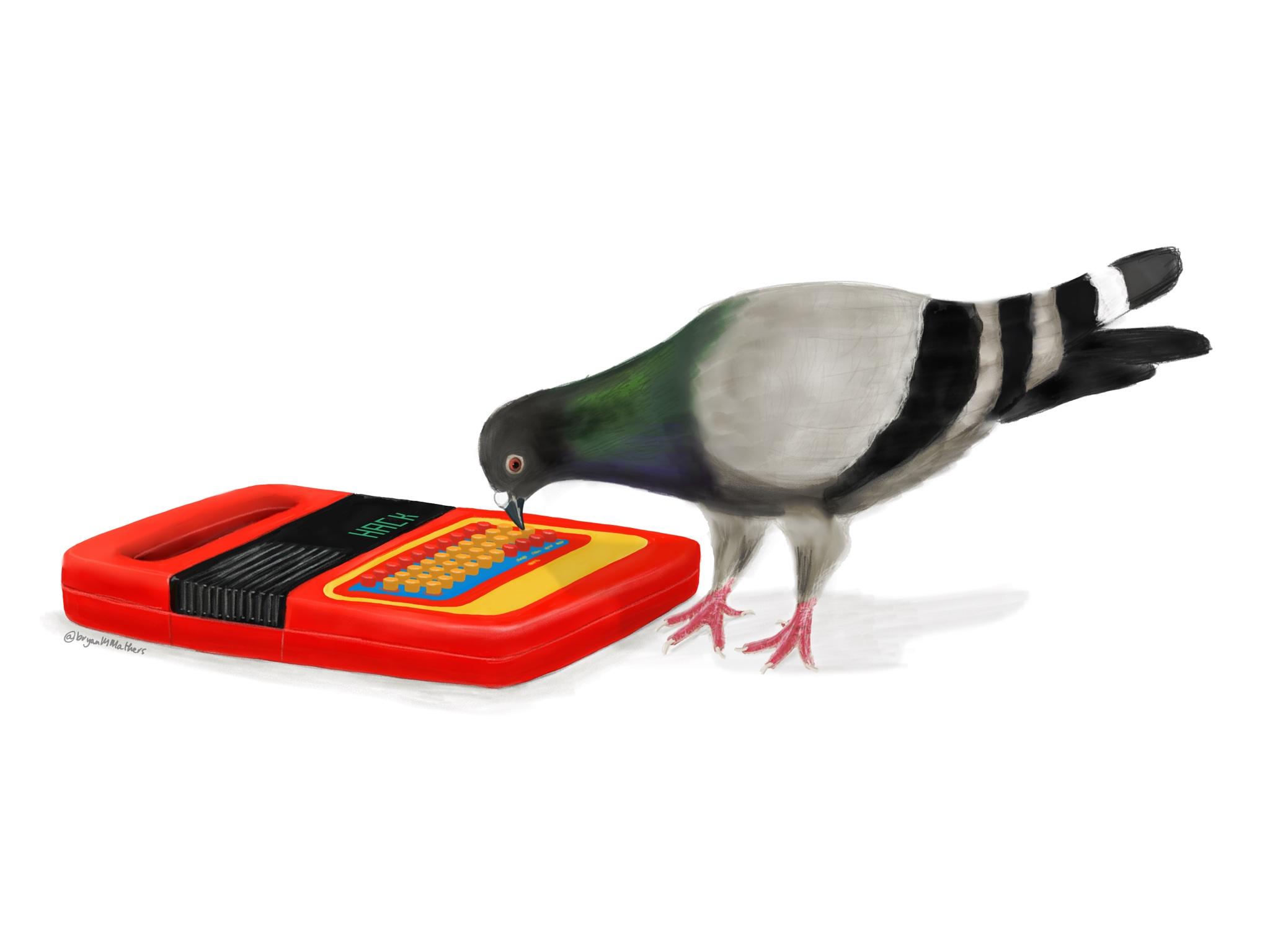 files/images/pigeon.jpg