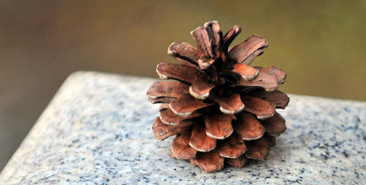 files/images/pine_cone.PNG, size: 285047 bytes, type:  image/png