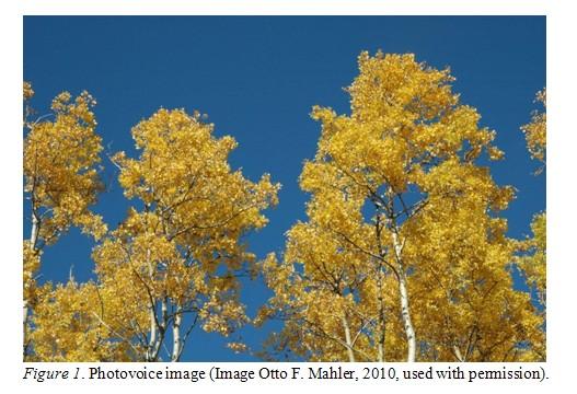 files/images/trees.jpg, size: 75605 bytes, type:  image/jpeg